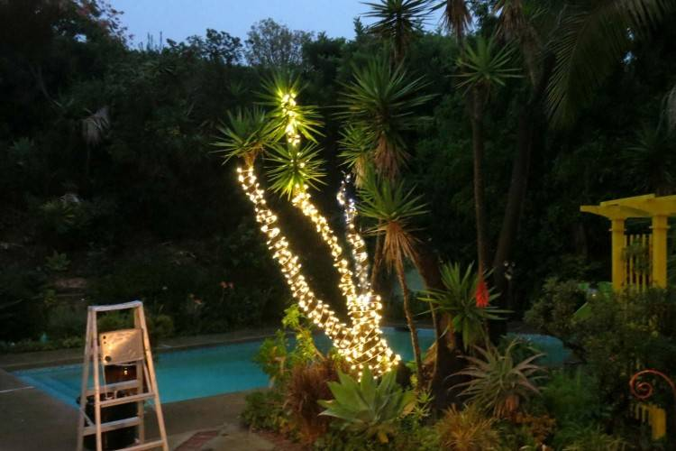 Choose a tree with interesting branches, like this yucca