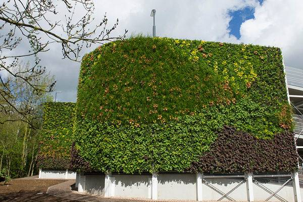 outdoor living walls