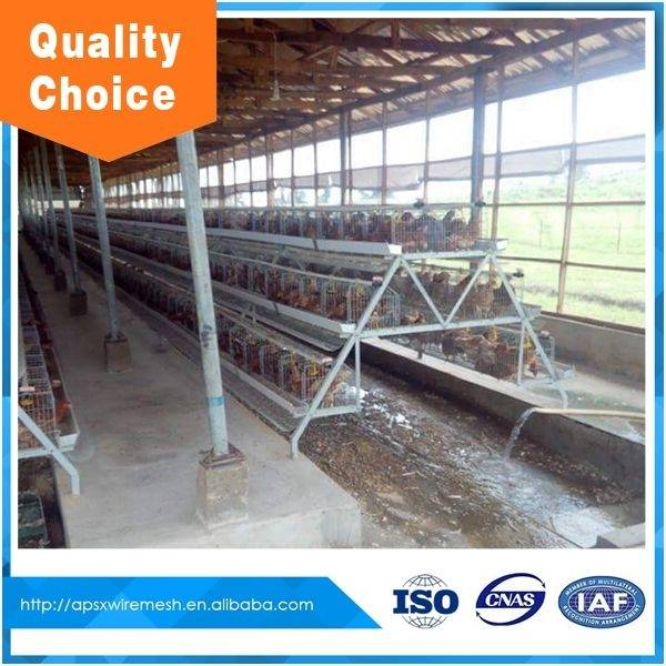 China Chicken breeding cage/layer egg chicken cage/poultry farm house design